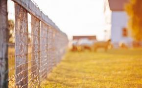 Картинка зелень, трава, листья, солнце, макро, деревья, природа, дом, фон, обои, забор, ограда, ограждение, день, wallpaper, …