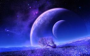 Обои дерево, звезды, звездное небо, планета, спутник, ланшафт