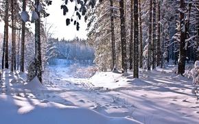 Картинка зима, лес, солнце, снег, тень, forest, Winter, snow
