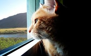 Обои Кошка, Взгляд, Окно, Даль