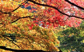 Картинка осень, лес, листья, деревья, ветки
