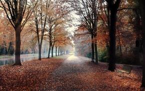Обои осень, город, улица