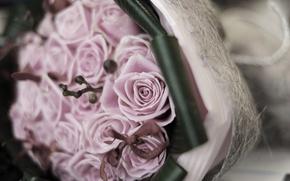 Картинка цветы, розы, букет, ветка, размытость