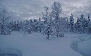 Картинка сугробы, снег, зима, деревья, Лапландия, Finland, ручей, Финляндия, Саариселькя, Saariselka, Lapland, лес