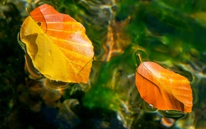 Картинка осень, листья, вода