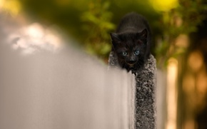 Картинка кошка, котенок, фон, черный, забор, маленький, мордочка, герой, милый, боится, смелый, заборолаз