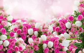 Обои розы, много, цветы, фото