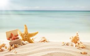 Картинка море, морская звезда, тропики, пляж, ракушки, песок