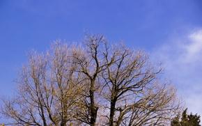 Картинка green, sky, trees, nature, blue, cloud, high, green tree