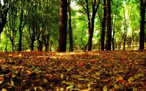 Картинка лес, листья, деревья, Осень
