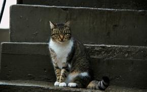 Картинка кошка, кот, взгляд, морда, пушистый, котейка