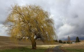 Картинка road, tree, farm, cloudy, farmland