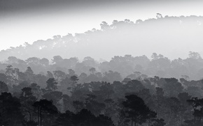 Картинка trees, fog, black and white, mist, b/w, rainforest