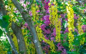 Картинка деревья, цветы, заросли