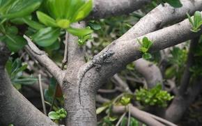 Картинка зелень, макро, дерево, листва, куст, ящерица, ствол, кора, живое, пресмыкающееся