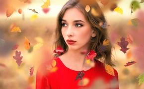 Картинка губки, прелесть, листопад, Inese Stoner