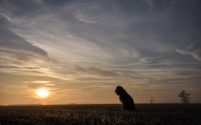 Картинка поле, собака, утро