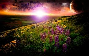 Картинка Трава, Планета, Горизонт, Horizon