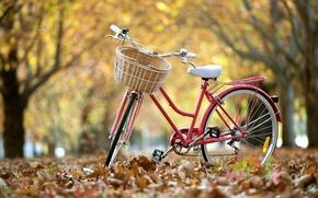 Картинка листья, велосипед, улица