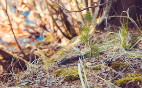 Обои весна, трава, елка, змея, мох, ветви, природа, грация, ветка, макро, можжевельник, лес, змей, дерево, листья, ...