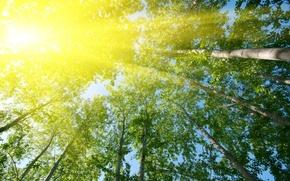 Картинка листья, солнце, лучи, деревья, природа, фон, дерево, обои, зеленые, wallpaper, листочки, trees, широкоформатные, background, leaves, …