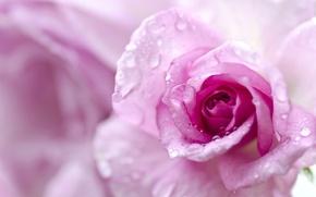 Картинка бутон, макро, боке, лепестки, капли, роза