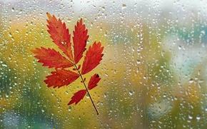 Картинка осень, стекло, капли, макро, лист, дождь, окно