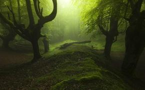 Картинка grass, trees, landscape, nature, leaves, sunlight, trunk, mist, moss, Forest, soft light, dead tree