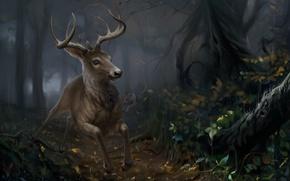Картинка лес, природа, олень, by SalamanDra-S