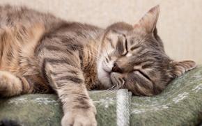 Картинка Спит, Кот, Животные, Лапы