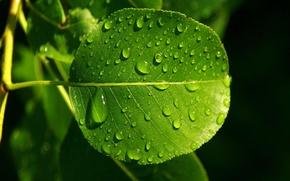 Обои осень, прожылки, Лист, роса, зелёный, капли