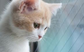 Картинка котёнок, Hannah, © Benjamin Torode