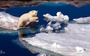 Картинка природа, медведь, север