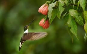 Картинка цветы, птица, куст, колибри