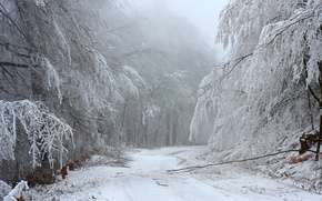 Картинка зима, дорога, лес, снег, деревья, ветки, природа