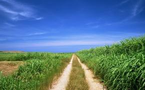 Обои дорога, путь, поле