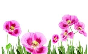 Картинка pink, beatuful, fiowers