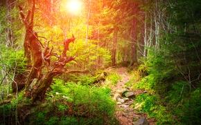 Картинка лес, солнце, деревья, камни, тропинка, кусты