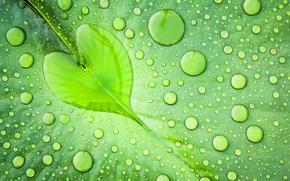Картинка Лист, макро, вода, зеленый, капли