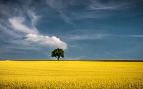 Картинка поле, горизонт, field, tree, дерева, horizon, поля из золота, field of gold