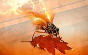 Картинка лист, огонь, Муха