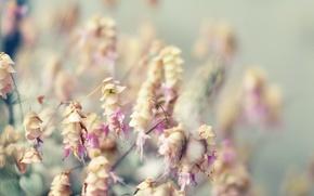 Обои Цветы, букет, размытие