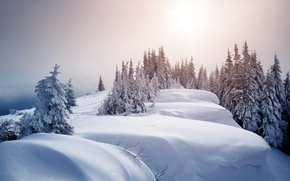 Картинка зима, снег, деревья, ели, сугробы