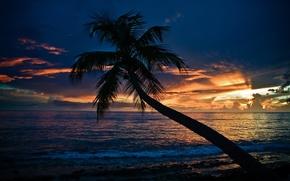 Картинка море, пляж, закат, пальма