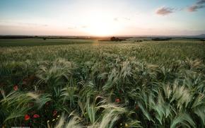 Картинка поле, небо, солнце, весна
