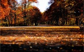Обои осень, листья, аллея