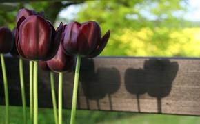 Картинка свет, цветы, природа, стебли, весна, Тюльпаны