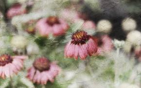 Обои цветы, стиль, фон