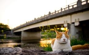 Картинка кошка, закат, мост
