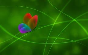 Картинка цвет, Бабочка, зеленый, линии